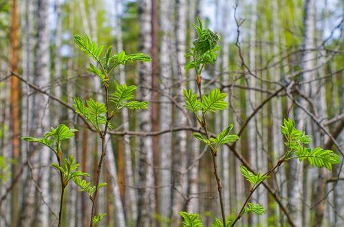 spring sheet nature