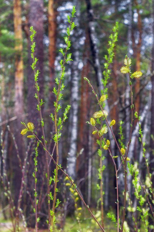 spring sheet leaves
