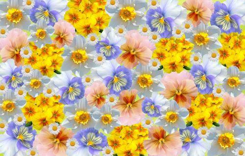 spring daffodils primroses