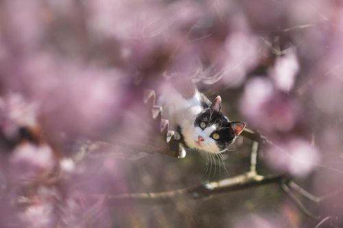spring cat flowers