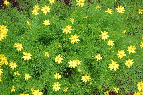 spring filigree garden