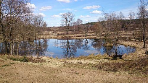 spring lake mirroring