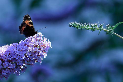 spring butterfly rusalka