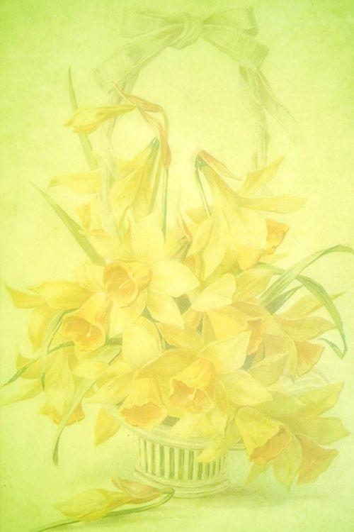 spring daffodils yellow