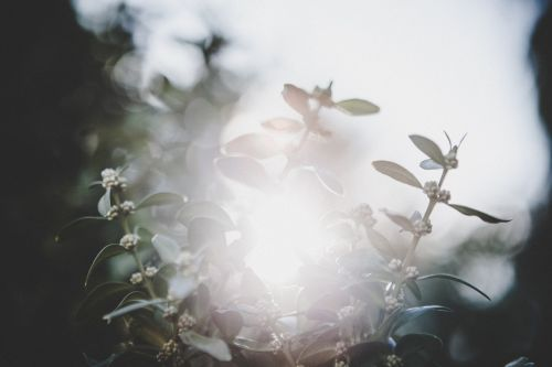 spring sun flare hipster