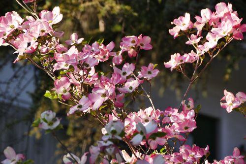 spring meran still life