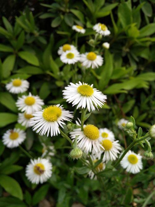 spring wild flowers living foods