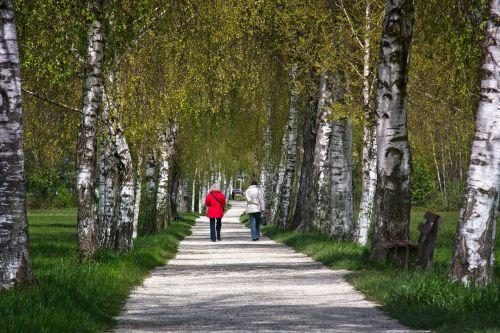 spring avenue birch
