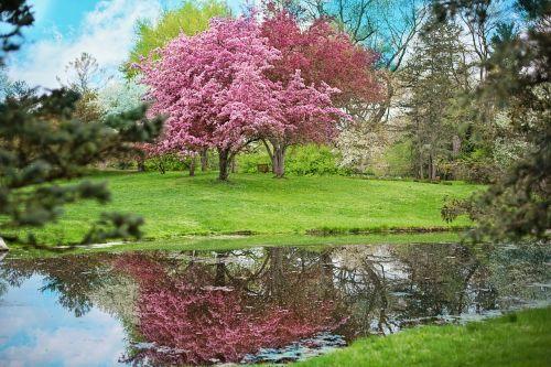 spring pink flowers pink tree