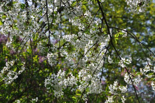 spring cranberry color
