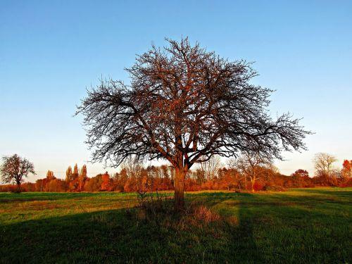 pavasaris,medis,laukas,gamta,saulėtas