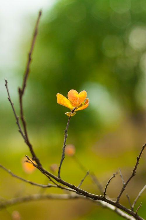 spring living foods flowers