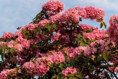 spring brazil the northern hemisphere