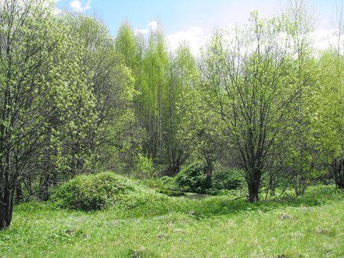 spring forest blue sky