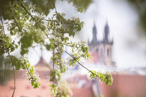 spring flowers city