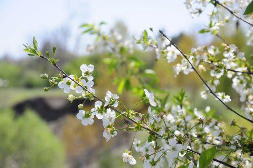 spring flower network