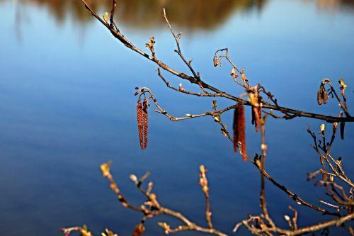 spring signs of spring blue sky