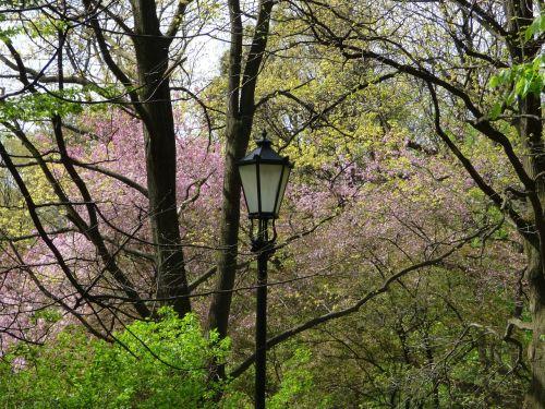 spring lantern blooms