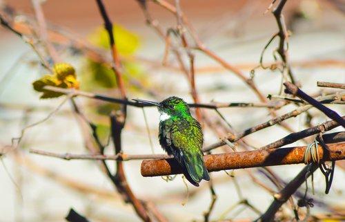 spring  beija flor  birds