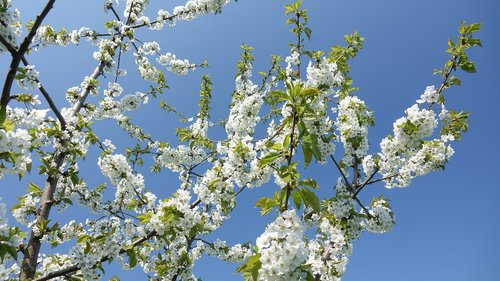 spring  flowers  sky