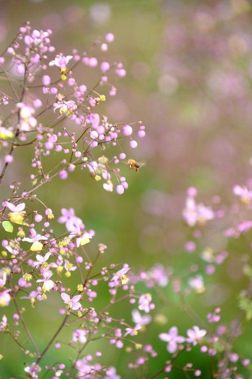 spring wildflower flowers