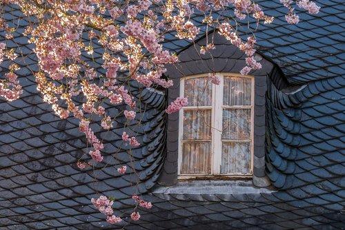 spring  blossom  bloom