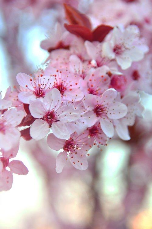 spring  spring flowers  pink