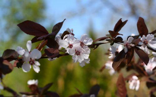 spring flowers beautiful