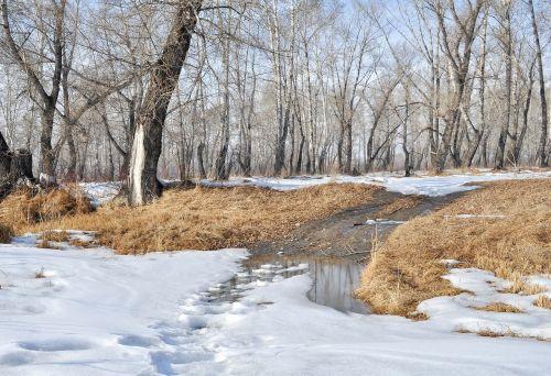 spring snow trees