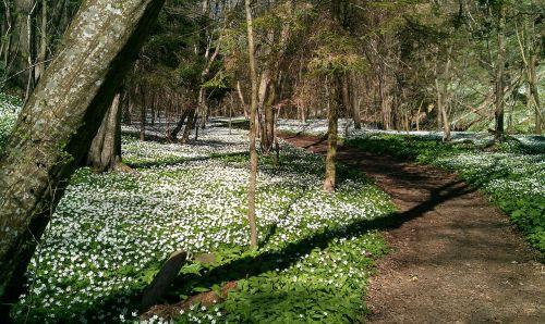 spring kobbeaen bornholm