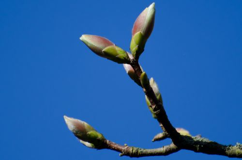 Spring Blooms On The Branch