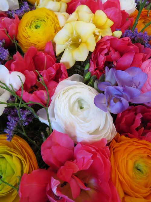pavasario žiedai,anemones,spalvinga,gėlės,farbenpracht,pavasaris