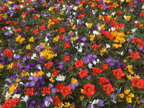 spring flowers  colorful  flowers