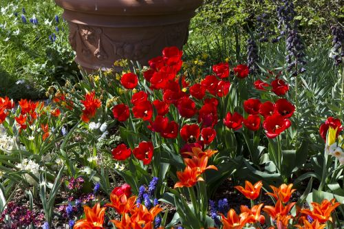 spring flowers tulips red