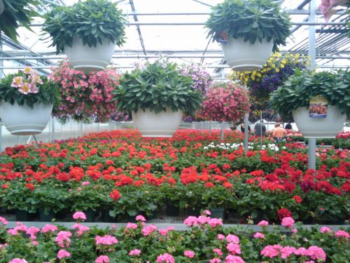 Spring Flowers Greenhouse 11