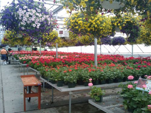 Spring Flowers Greenhouse 13