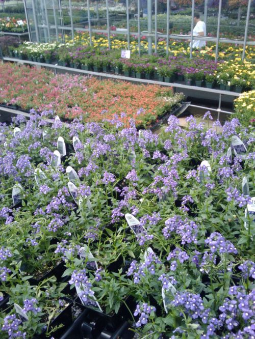 Spring Flowers Greenhouse 15