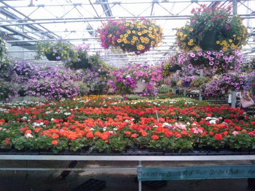 Spring Flowers Greenhouse 16