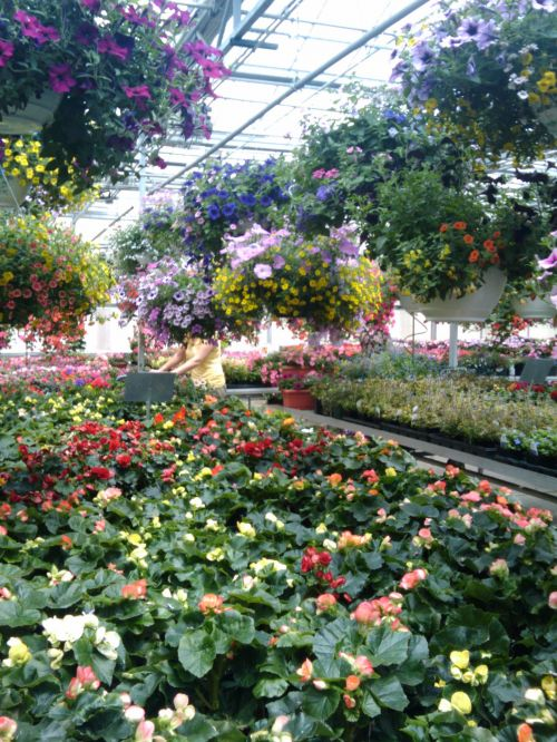Spring Flowers Greenhouse 3