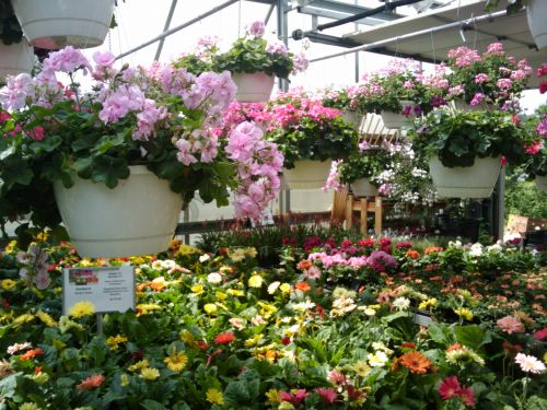 Spring Flowers Greenhouse 5