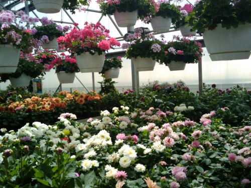 Spring Flowers Greenhouse 6