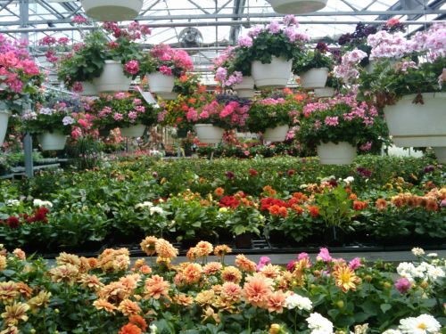 Spring Flowers Greenhouse 7