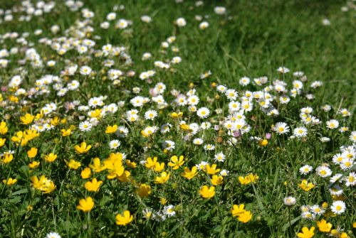 spring garden margaritas nature