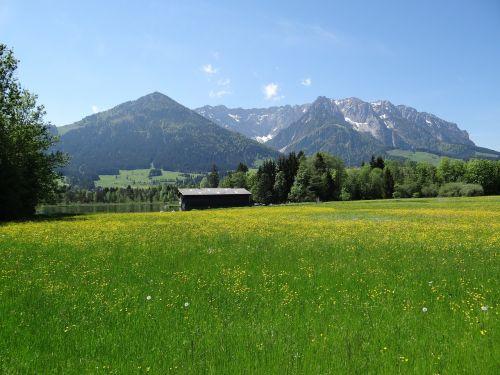 spring meadow kaiserwinkl tyrol