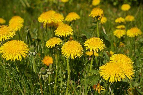 spring meadow meadow spring