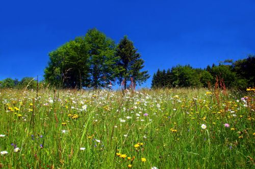 spring meadow flower meadow wild flowers