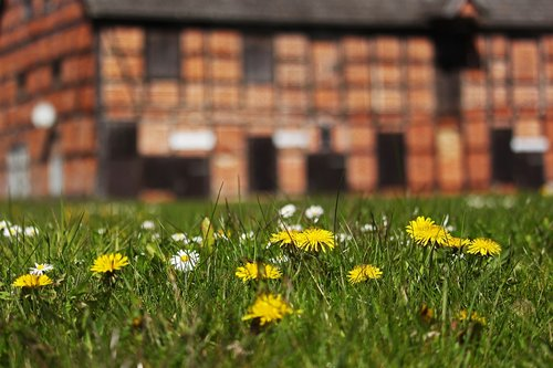 spring meadow  fachwerkhaus  farm