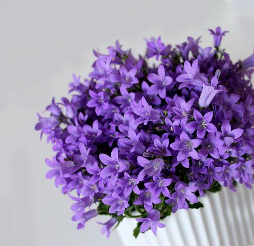 spring plant,plant,flower,flowers,purple,potted plant,house plant
