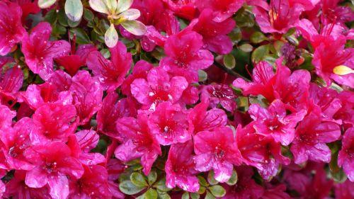 Spring Red Flora