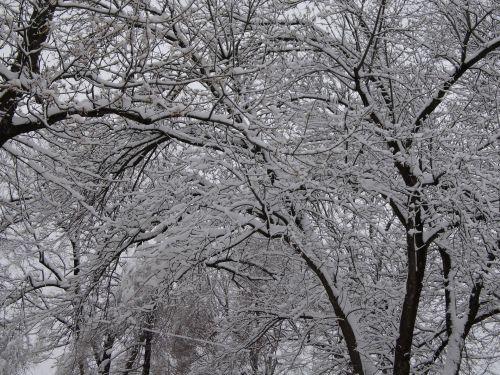 Spring Snow 3
